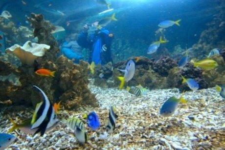 Akwarium Morskie w Bergen