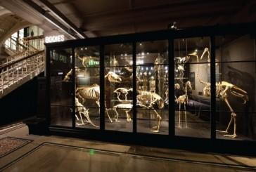 Muzeum Manchester ijego niezwykłe kolekcje